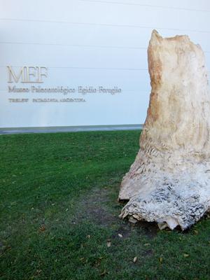 Argentina, Chubut, Trelew, MEF, petrified tree