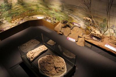 Argentina, Chubut, Trelew, MEF, dinosaur fossils