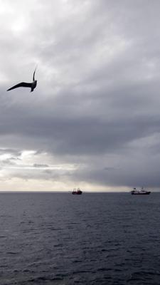 Argentina, Chubut, Puerto Madryn