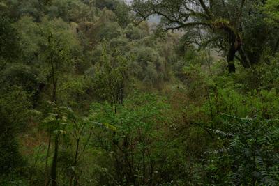 Argentina, Salta, bosque, forest