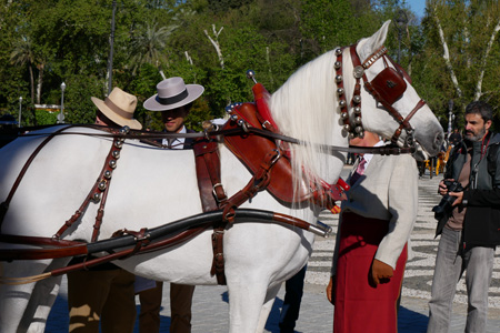 España, Spain, Andalucía, Sevilla, Plaza de España, horse, caballo, Exhibición de Enganches