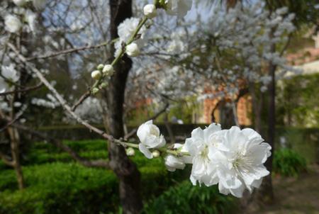 España, Sevilla, Andalucía, primavera, spring, flowers, blossoms, flores
